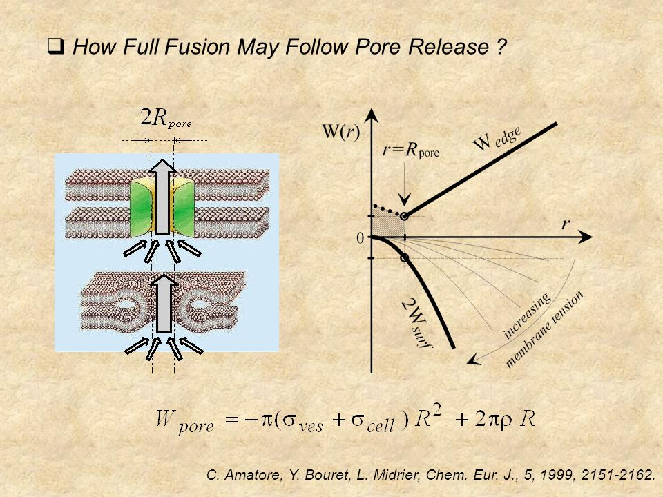  How Full Fusion May Follow Pore Release . C. Amatore, Y.