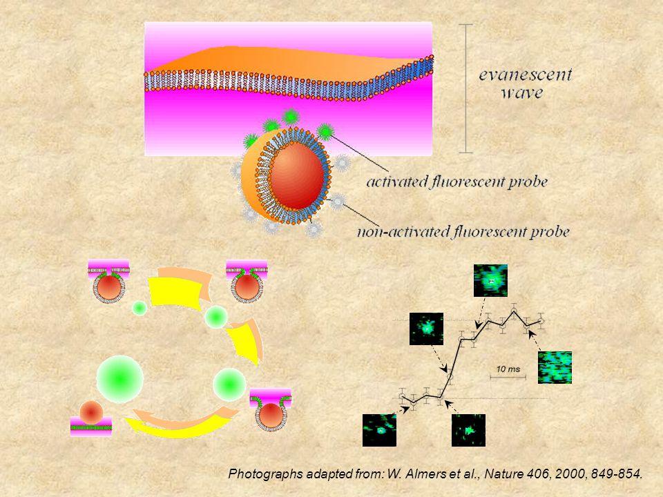 LPC N O P O O O O H OH O AA CO 2 H  Regulating Exocytosis with Exogenous Bilipids