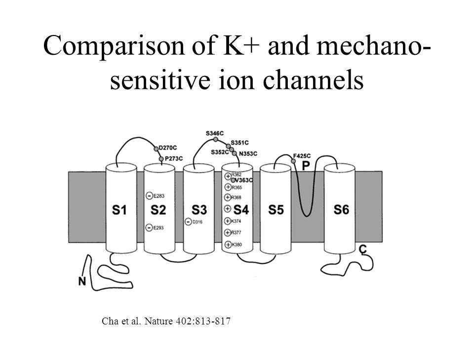 Comparison of K+ and mechano- sensitive ion channels Cha et al. Nature 402:813-817