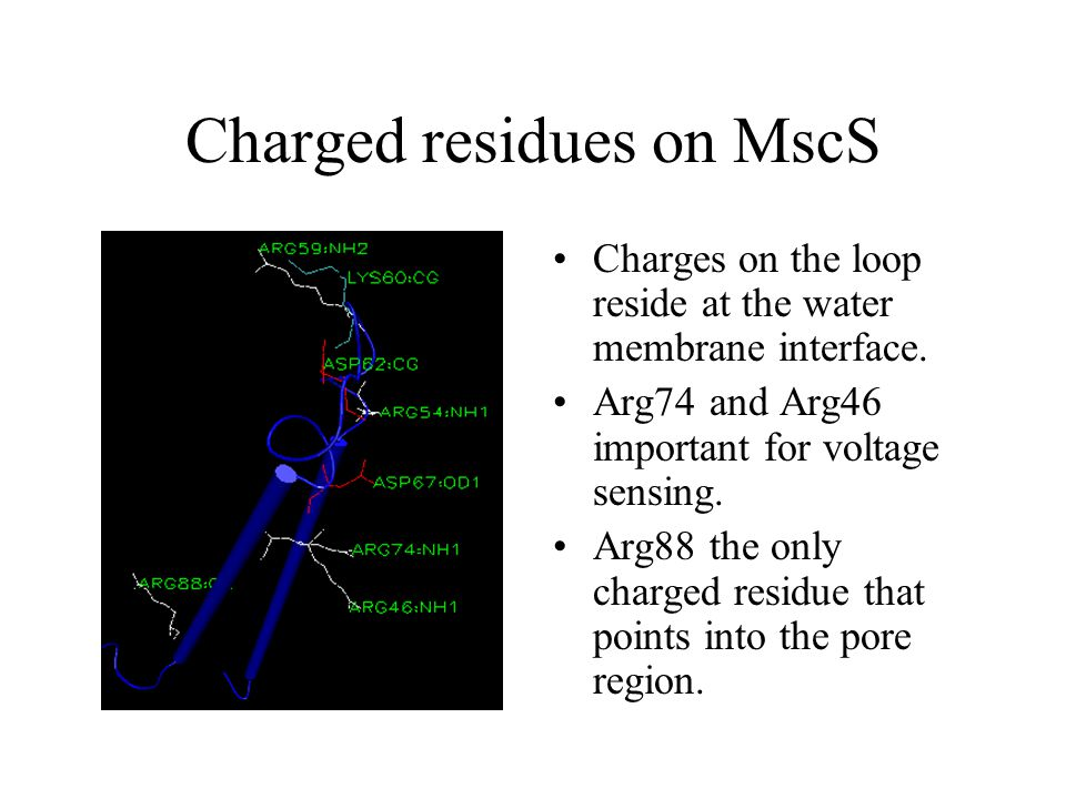 Charged residues on MscS Charges on the loop reside at the water membrane interface.
