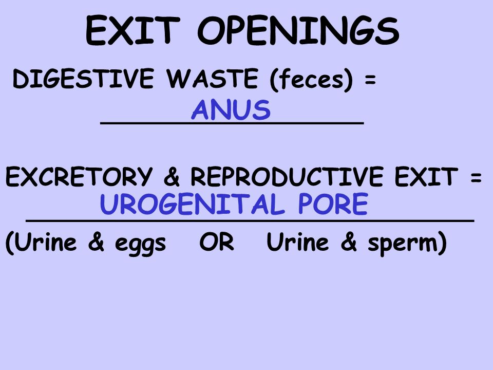 EXIT OPENINGS DIGESTIVE WASTE (feces) = _________________ EXCRETORY & REPRODUCTIVE EXIT = _____________________________ (Urine & eggs OR Urine & sperm