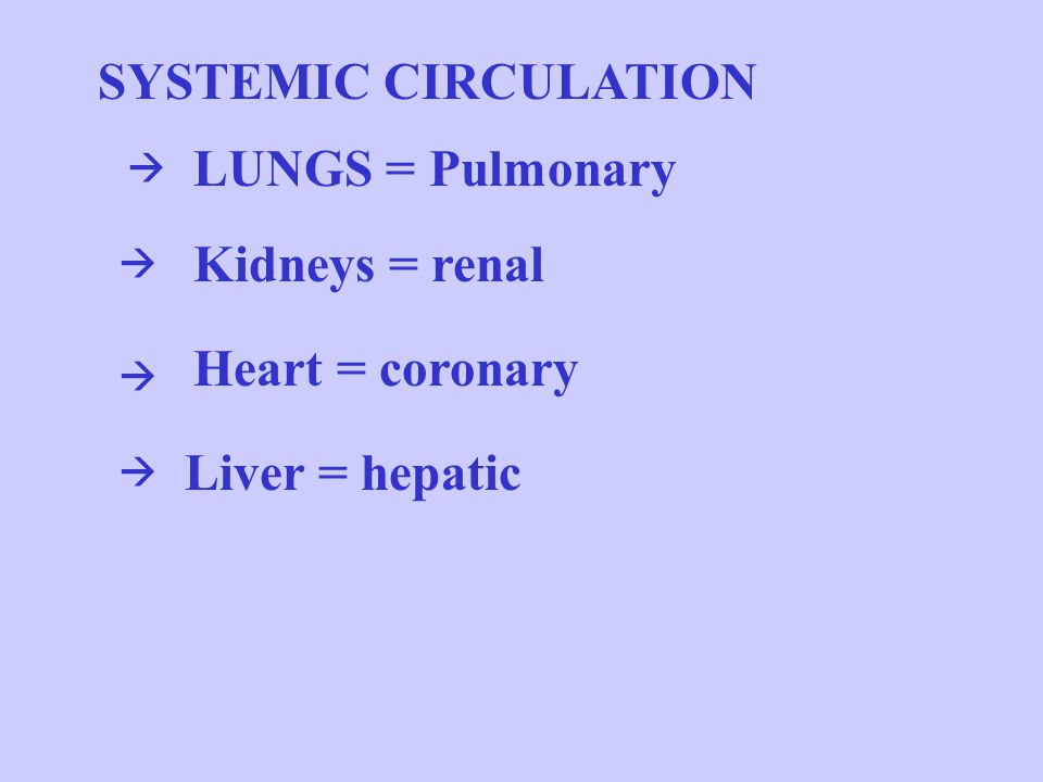 SYSTEMIC CIRCULATION Kidneys = renal Heart = coronary Liver = hepatic LUNGS = Pulmonary    