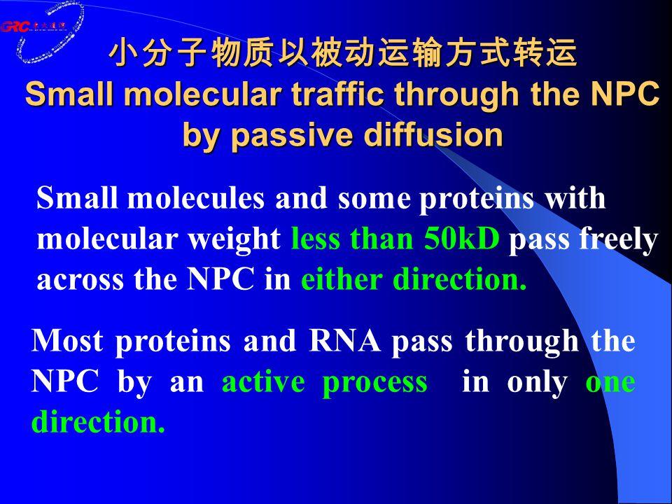小分子物质以被动运输方式转运 Small molecular traffic through the NPC by passive diffusion Most proteins and RNA pass through the NPC by an active process in only on