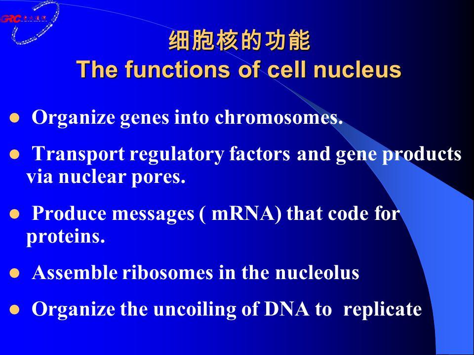 细胞核的功能 The functions of cell nucleus Organize genes into chromosomes. Transport regulatory factors and gene products via nuclear pores. Produce messag