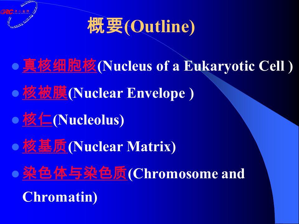 真核细胞核 (Nucleus of a Eukaryotic Cell ) 真核细胞核 核被膜 (Nuclear Envelope ) 核被膜 核仁 (Nucleolus) 核仁 核基质 (Nuclear Matrix) 核基质 染色体与染色质 (Chromosome and Chromatin) 染色体与染色质 概要 (Outline)
