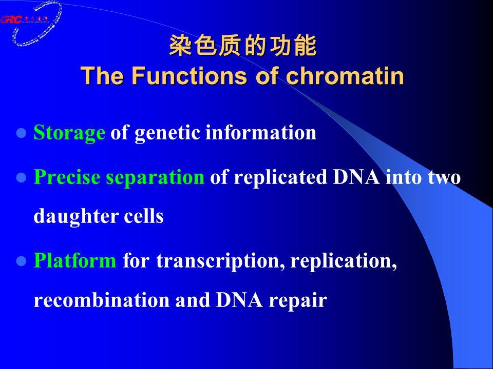 染色质的功能 The Functions of chromatin Storage of genetic information Precise separation of replicated DNA into two daughter cells Platform for transcription, replication, recombination and DNA repair
