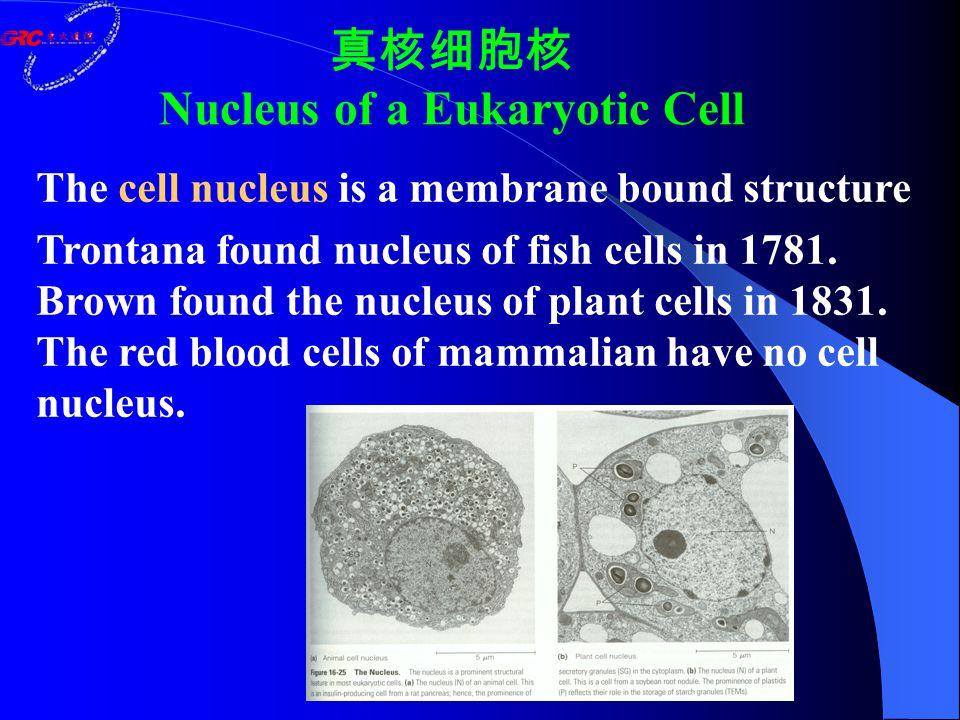 真核细胞核 Nucleus of a Eukaryotic Cell The cell nucleus is a membrane bound structure Trontana found nucleus of fish cells in 1781. Brown found the nucleu