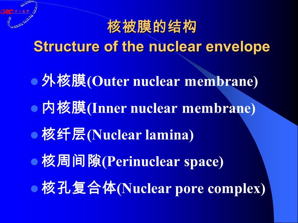 核被膜的结构 Structure of the nuclear envelope 外核膜 (Outer nuclear membrane) 内核膜 (Inner nuclear membrane) 核纤层 (Nuclear lamina) 核周间隙 (Perinuclear space) 核孔复合体 (Nuclear pore complex)