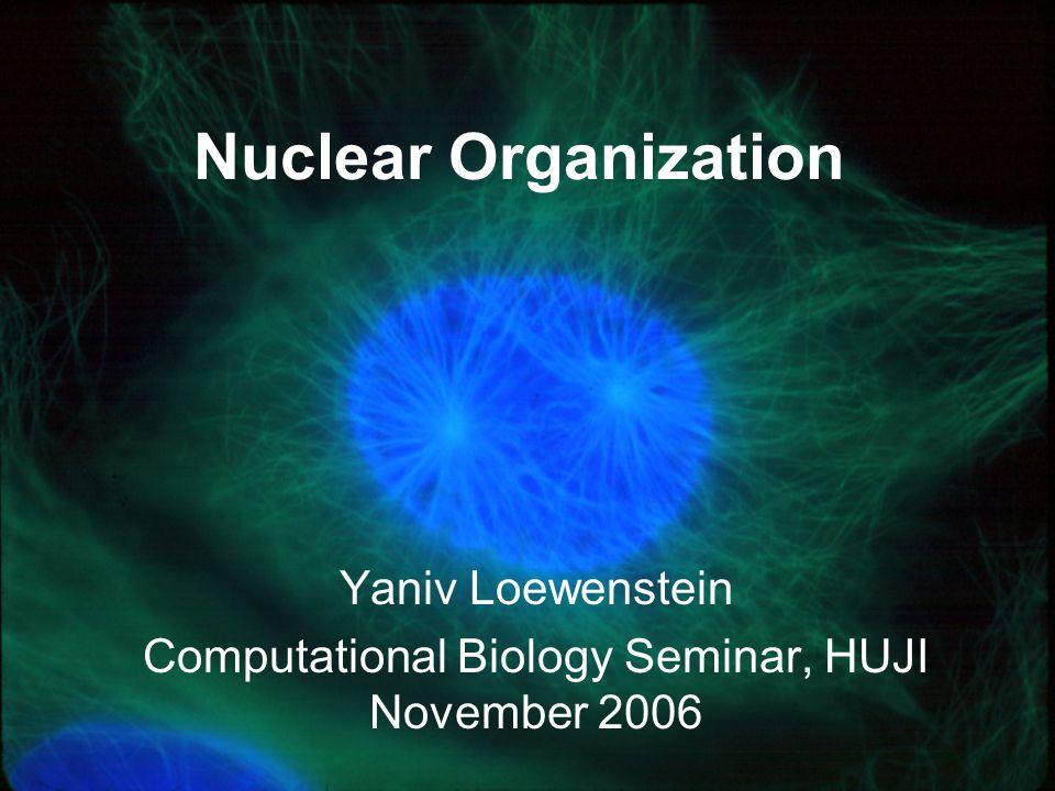 Yaniv Loewenstein Computational Biology Seminar, HUJI November 2006 Nuclear Organization