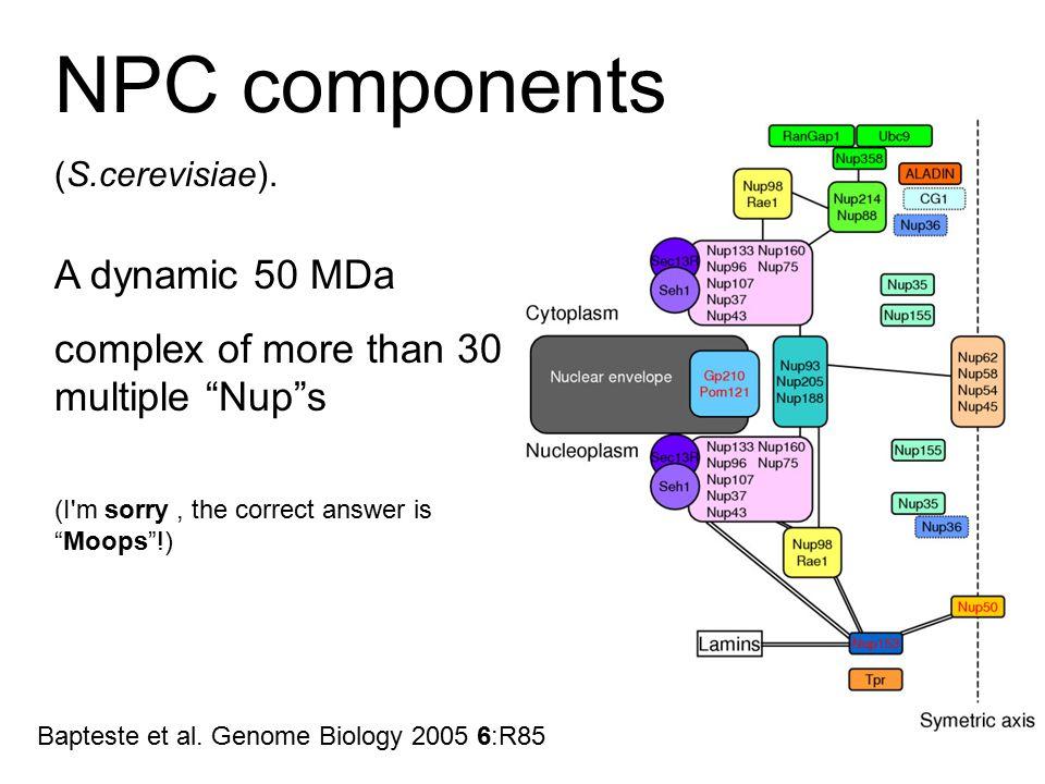 NPC components (S.cerevisiae). Bapteste et al.