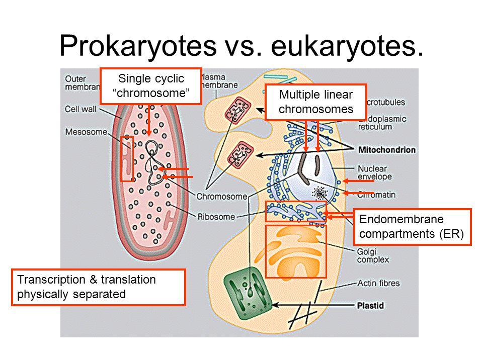 Prokaryotes vs. eukaryotes.