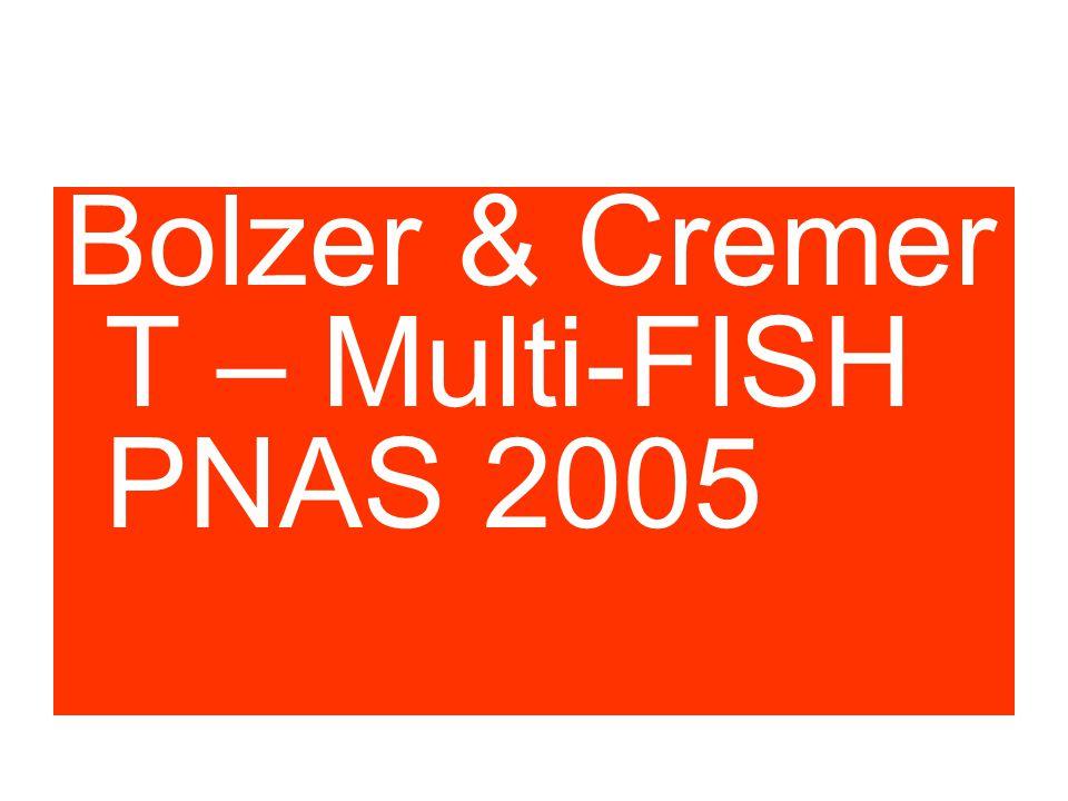 P Cook experiment Bolzer & Cremer T – Multi-FISH PNAS 2005