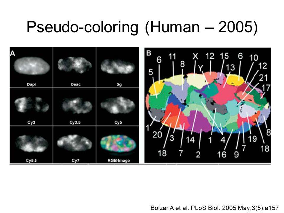 Pseudo-coloring (Human – 2005) Bolzer A et al. PLoS Biol. 2005 May;3(5):e157