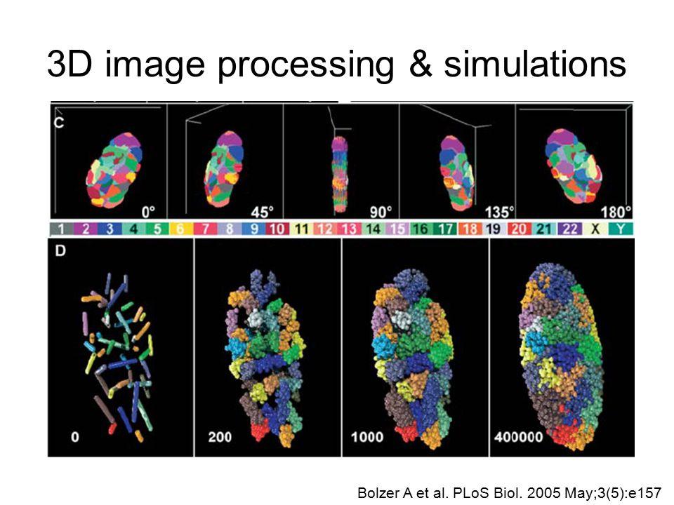 3D image processing & simulations Bolzer A et al. PLoS Biol. 2005 May;3(5):e157