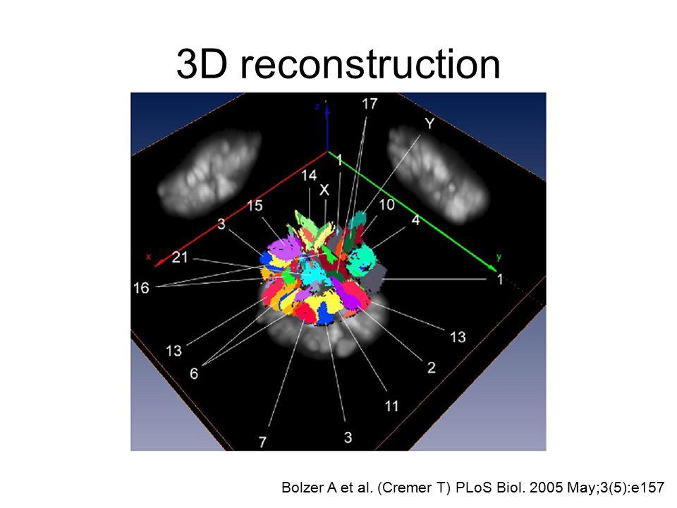 3D reconstruction Bolzer A et al. (Cremer T) PLoS Biol. 2005 May;3(5):e157