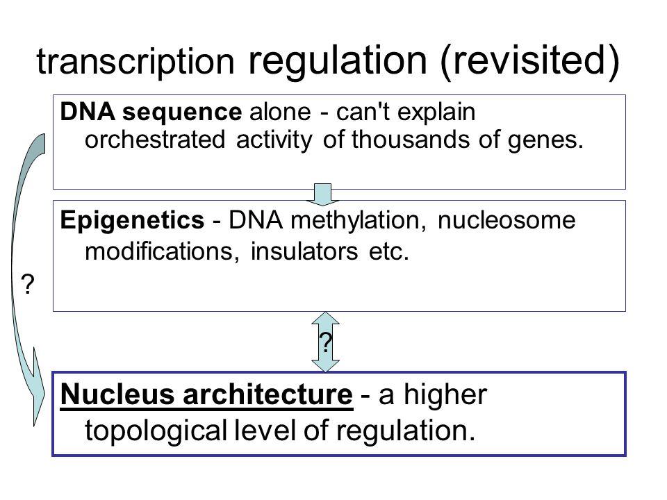 transcription regulation (revisited) Epigenetics - DNA methylation, nucleosome modifications, insulators etc.