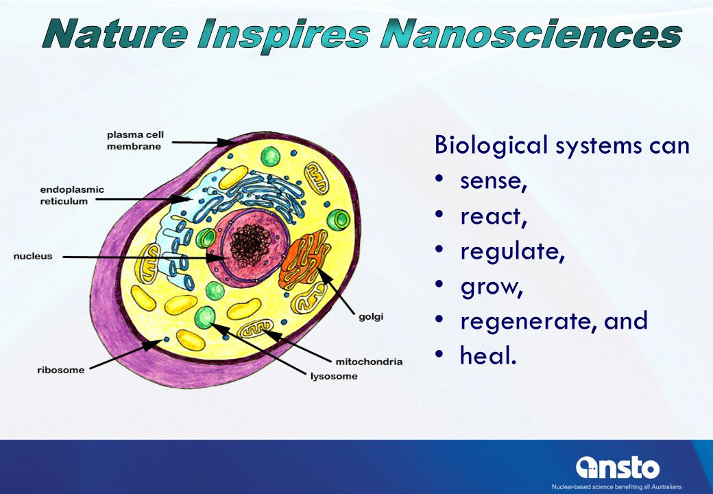 The nucleus has nanopores that control the movement of molecules in an out.