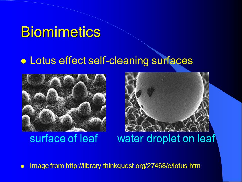 Biomimetics l Lotus effect self-cleaning surfaces l surface of leafwater droplet on leaf l Image from http://library.thinkquest.org/27468/e/lotus.htm