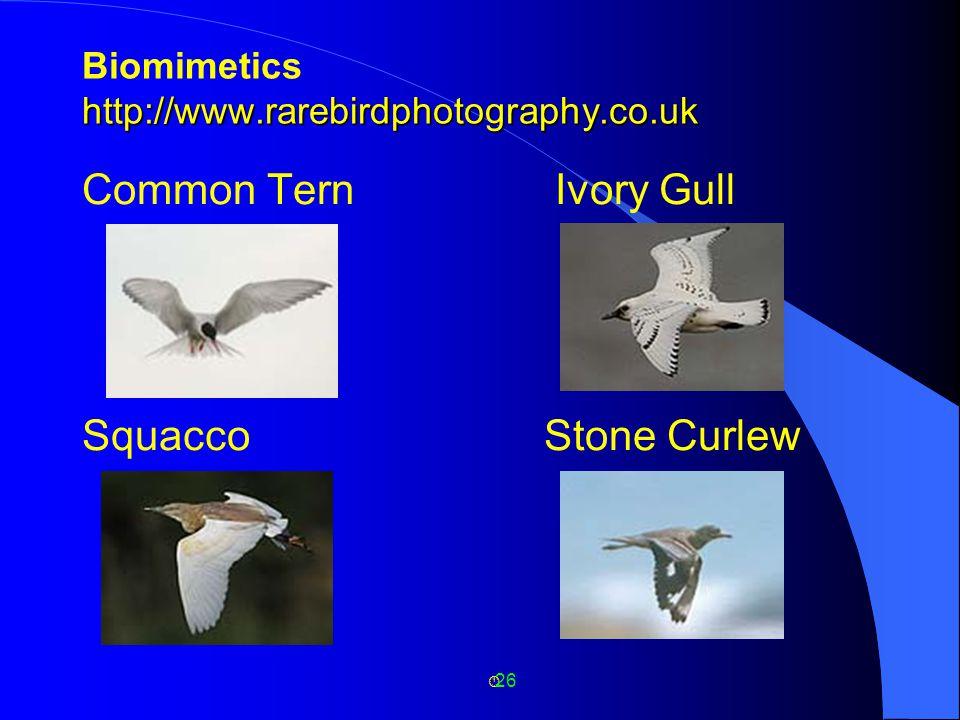 26 http://www.rarebirdphotography.co.uk Biomimetics http://www.rarebirdphotography.co.uk Common Tern Ivory Gull Squacco Stone Curlew