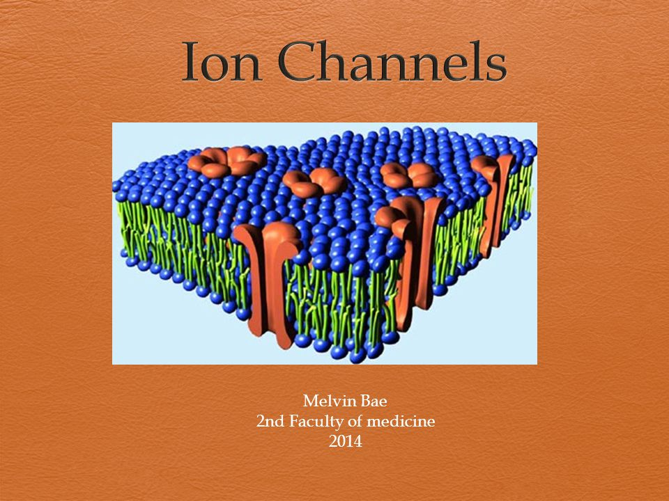 "Basic principles  Ion flux; driven by force of diffusion and/ or electrostatic forces  Ions diffuse through channels ( "" Leak channels ) =constantly open -> no further impuls needed  Gated channels  -> signal needed  Ion channels in each of living cell"