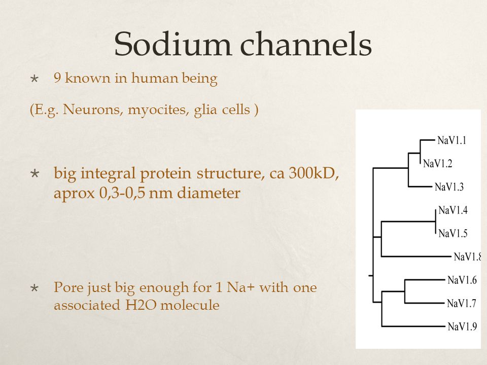 Sodium channels  9 known in human being (E.g.