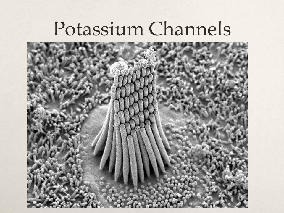 Potassium Channels