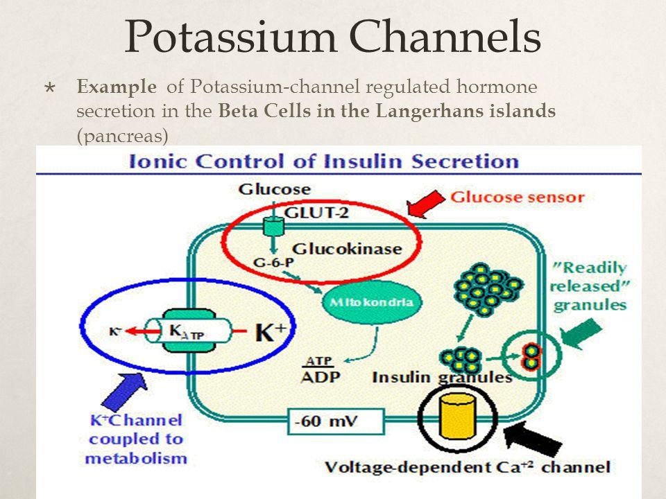 Potassium Channels  Example of Potassium-channel regulated hormone secretion in the Beta Cells in the Langerhans islands (pancreas)