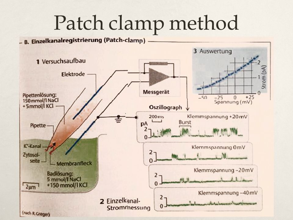 Patch clamp method