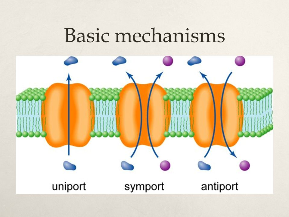 Basic mechanisms