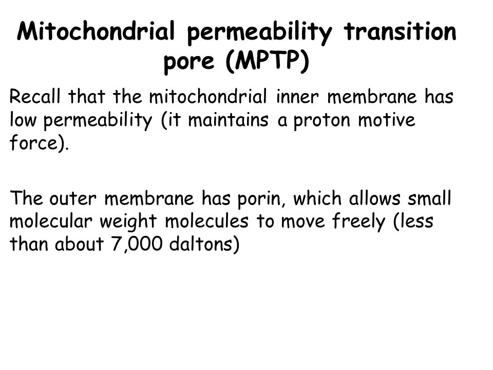 Mitochondrial permeability transition pore (MPTP) Recall that the mitochondrial inner membrane has low permeability (it maintains a proton motive forc
