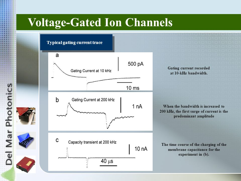 Voltage-Gated Ion Channels Typical gating current trace Gating current recorded at 10-kHz bandwidth.