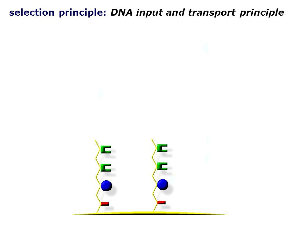 selection principle: DNA input and transport principle