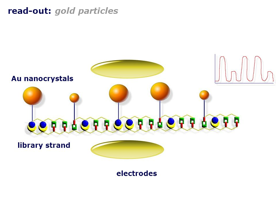 read-out: gold particles electrodes Au nanocrystals library strand