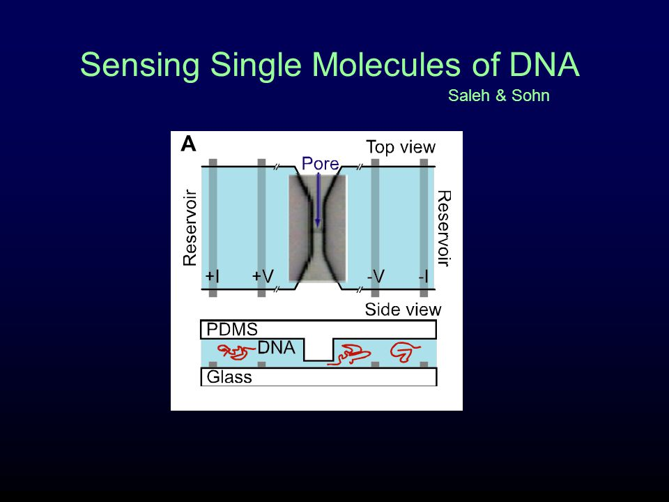 Sensing Single Molecules of DNA Saleh & Sohn