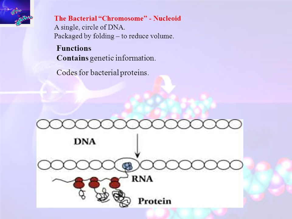 ON LACTOSE Enzyme is produced