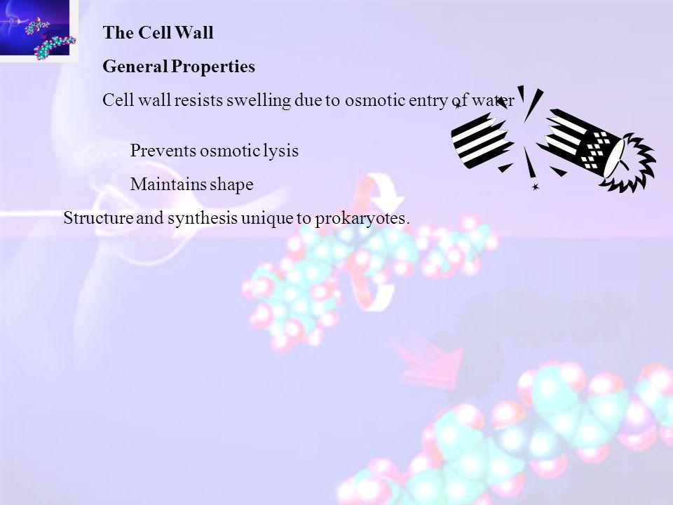 Extrachromosomal DNA – Plasmids Structure Circular DNA, smaller than nucleoid. Size ~ 1000 - 200, 000 bp (c.f. 4,000,000 base pairs) 1-700 copies. Fun