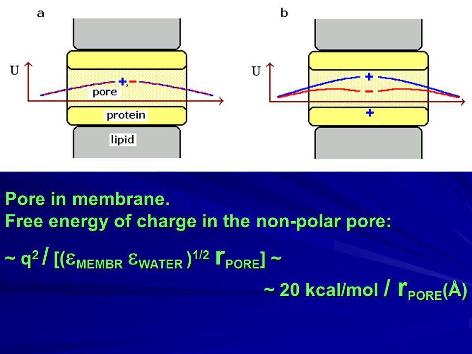 Pore in membrane.