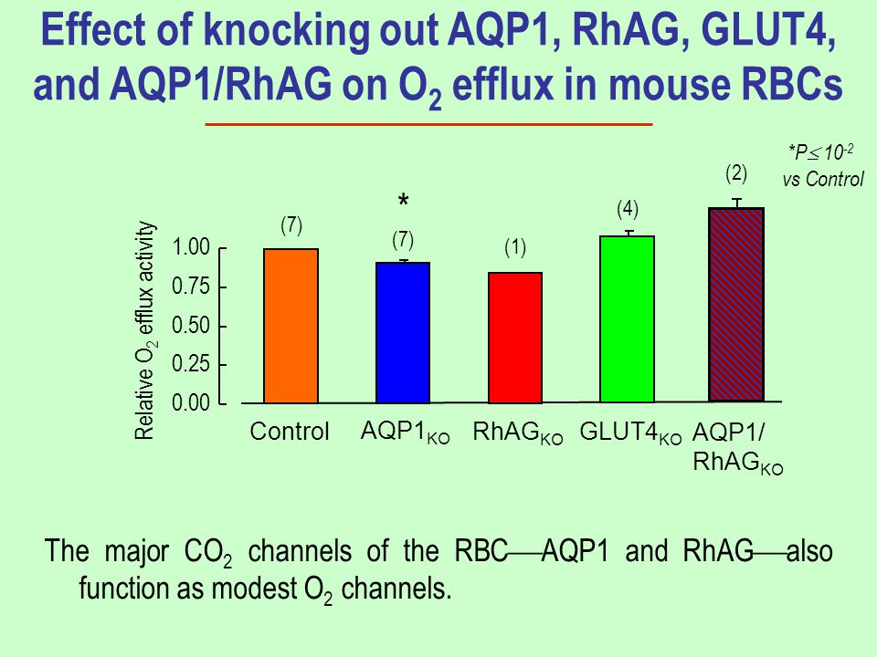 Effect of knocking out AQP1, RhAG, GLUT4, and AQP1/RhAG on O 2 efflux in mouse RBCs The major CO 2 channels of the RBC  AQP1 and RhAG  also function as modest O 2 channels.