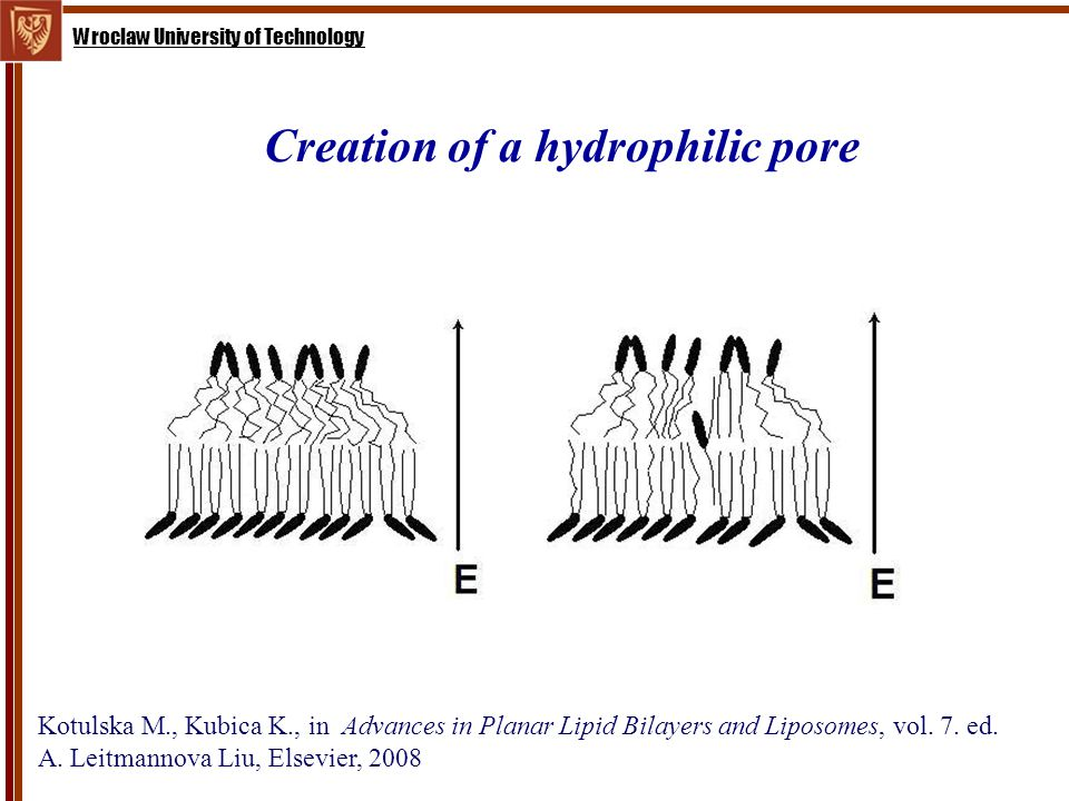 Wroclaw University of Technology Creation of a hydrophilic pore Kotulska M., Kubica K., in Advances in Planar Lipid Bilayers and Liposomes, vol.
