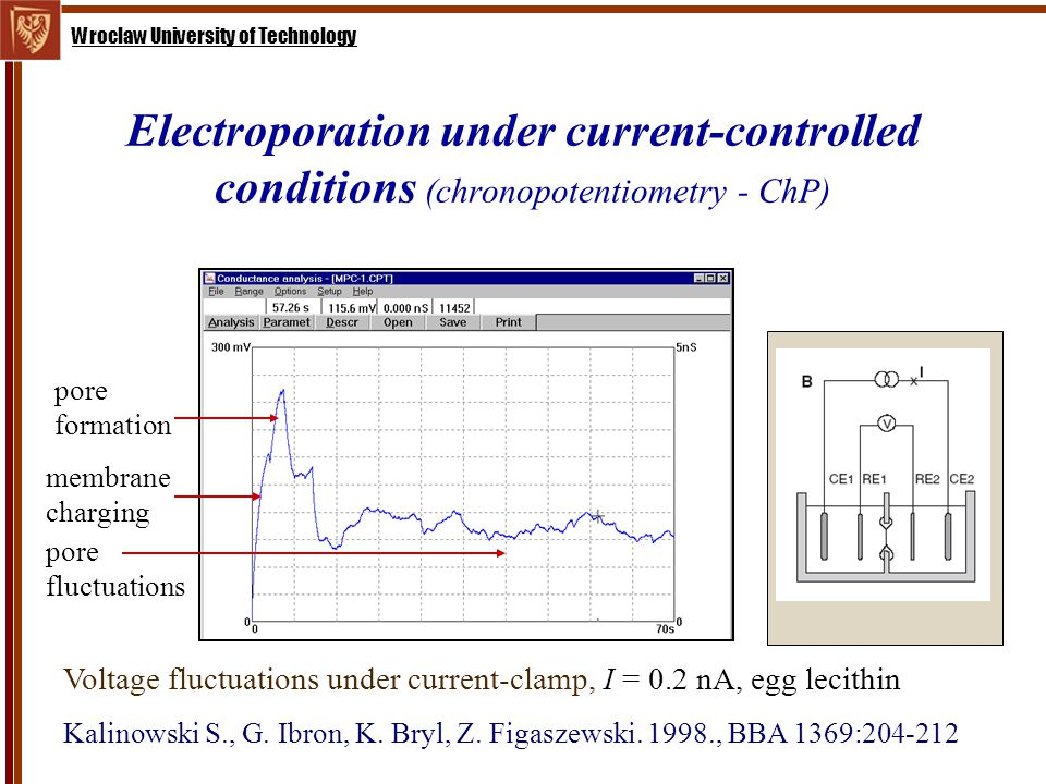 Wroclaw University of Technology Electroporation under current-controlled conditions (chronopotentiometry - ChP) pore formation membrane charging pore fluctuations Voltage fluctuations under current-clamp, I = 0.2 nA, egg lecithin Kalinowski S., G.