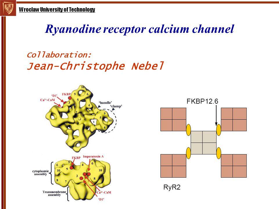 Wroclaw University of Technology Ryanodine receptor calcium channel Collaboration: Jean-Christophe Nebel FKBP12.6 RyR2