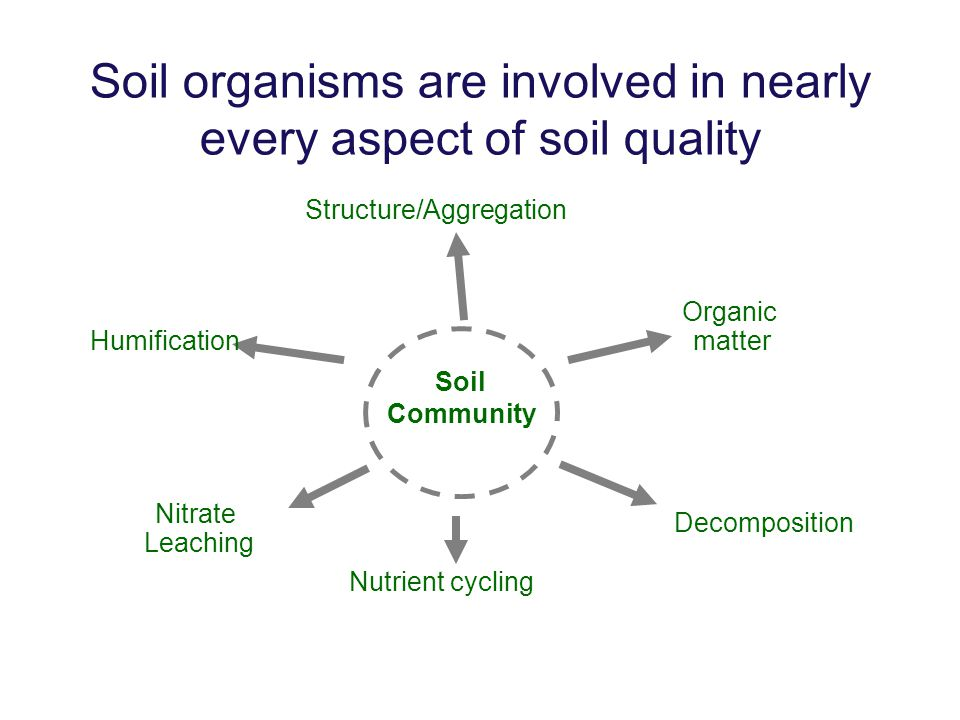 Soil organisms are involved in nearly every aspect of soil quality Organic matter Nitrate Leaching Soil Community Nutrient cycling Structure/Aggregation Humification Decomposition