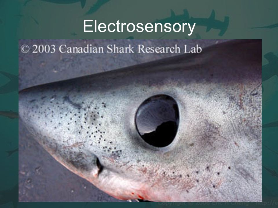 Electrosensory