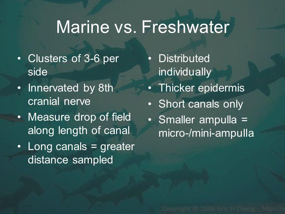 Marine vs.