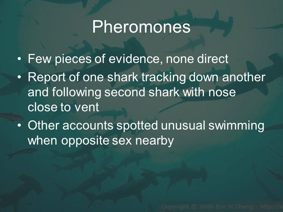 Pheromones Few pieces of evidence, none direct Report of one shark tracking down another and following second shark with nose close to vent Other accounts spotted unusual swimming when opposite sex nearby