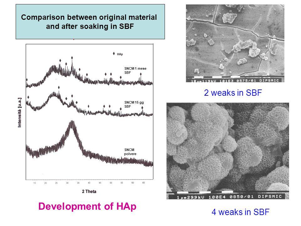 SNCM polvere SNCM 15 gg SBF SNCM 1 mese SBF Confronto tra SNCM tal quale, dopo 15 gg SBF e dopo 1 mese SBF 2 weaks in SBF Comparison between original material and after soaking in SBF Development of HAp 4 weaks in SBF