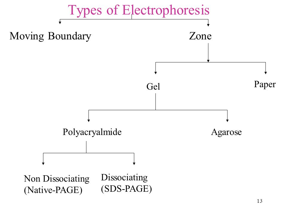 13 Types of Electrophoresis Moving Boundary Zone Paper Gel PolyacryalmideAgarose Non Dissociating (Native-PAGE) Dissociating (SDS-PAGE)