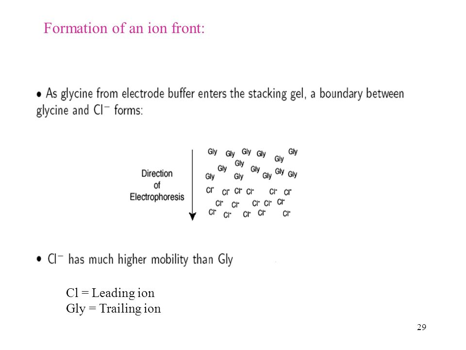 29 Formation of an ion front: Cl = Leading ion Gly = Trailing ion