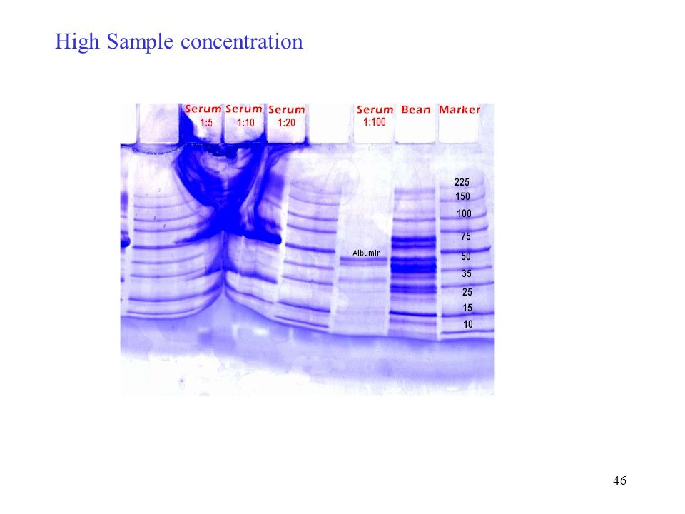 46 High Sample concentration