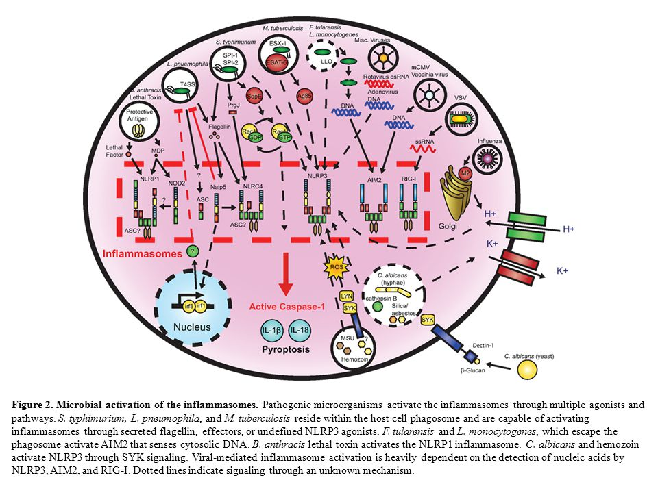 Figure 2. Microbial activation of the inflammasomes.